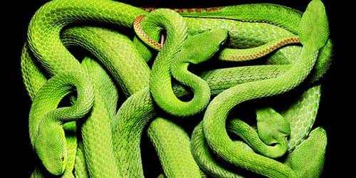 убить змею зеленого цвета