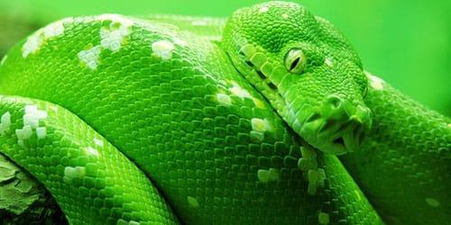 изумрудная змея
