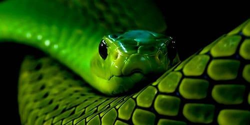 держать в руках зеленую змею