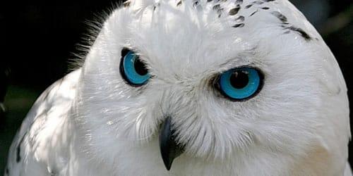 видеть белую сову во сне