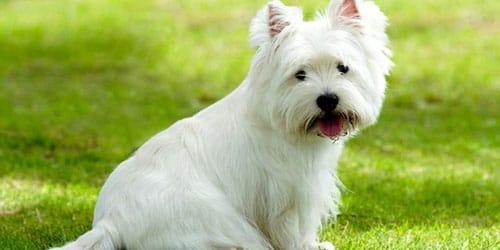 видеть белого пса во сне