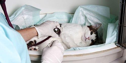 приснился больной кот