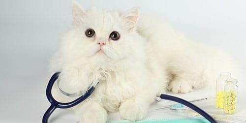 белая больная кошка