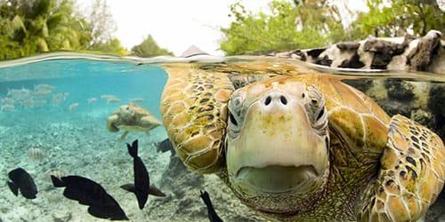 к чему снится черепаха в воде
