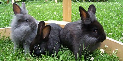 темные крольчата