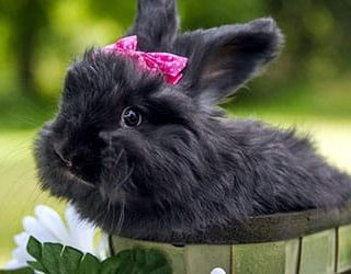 К чему снится черный кролик?