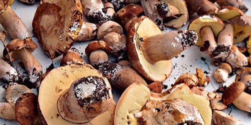 видеть червивые грибы во сне