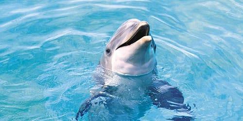 дельфин в чистом море