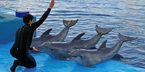 шоу программа с дельфинами