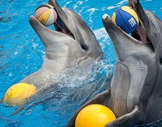 Дельфины в бассейне