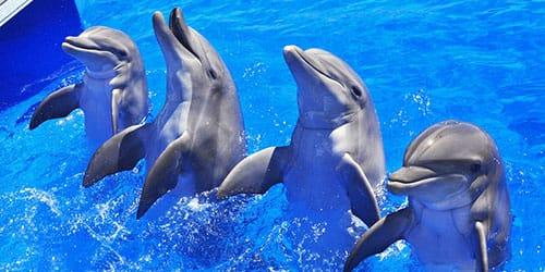 к чему снятся дельфины в бассейне