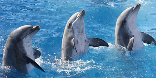 наблюдать за дельфинами в бассейне