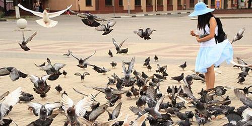 кормить голубей во сне