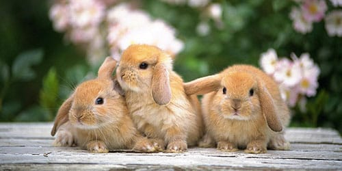 маленькие крольчата во сне