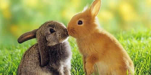 крольчата на лугу