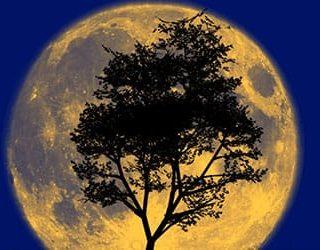 Луна большая и полная