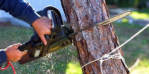 пилить сухое дерево