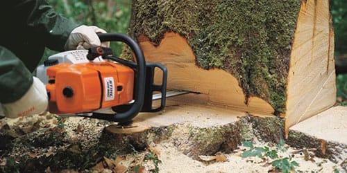 к чему снится пилить дерево