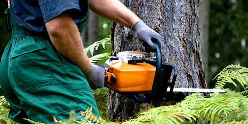 пилить дерево бензопилой