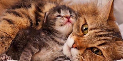 кошка с новорожденным котенком