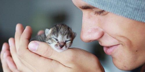 держать котенка в руках