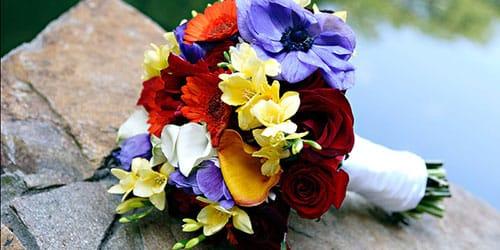много разноцветных цветов