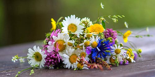 рвать цветы в лесу