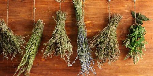 к чему снится сухая трава