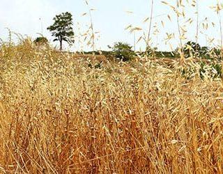Сухая трава