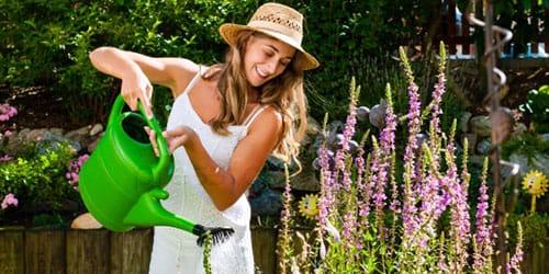 поливать сухие цветы в саду