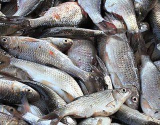 К чему снится свежая рыба?