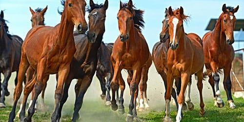 табун диких лошадей