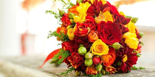 желтые и красные цветы