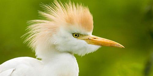 птица на воле