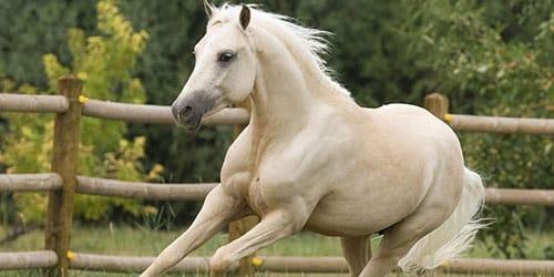 видеть белого коня во сне