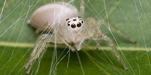 видеть белого паука во сне