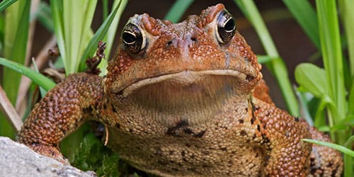 видеть большую жабу во сне