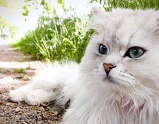 Большой кот или кошка