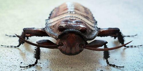 видеть во сне большого таракана