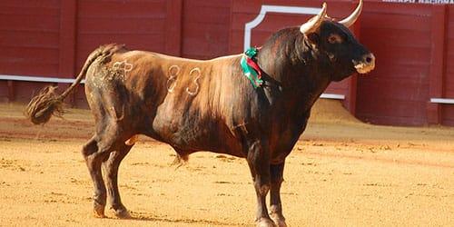 нападающий бык