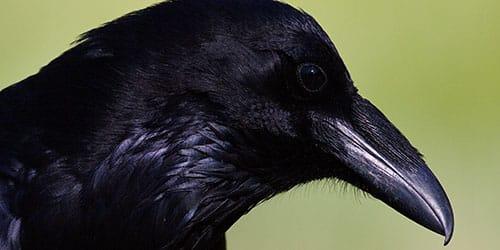 маленькая темная птица
