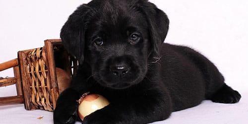 видеть во сне черного щенка