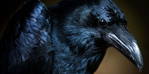 видеть черного ворона во сне