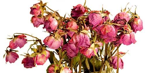 повявшие цветы