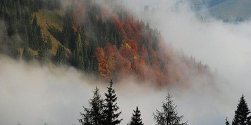 белесый туман