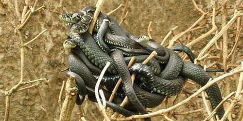 извивающиеся змеи