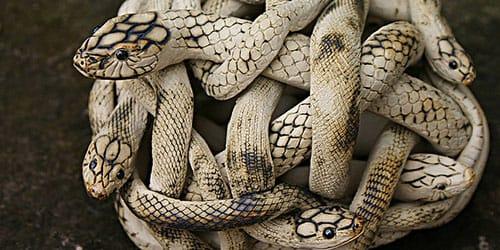 серые змейки