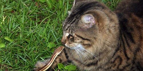 кошка укусила змею