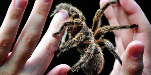 паук ужалил