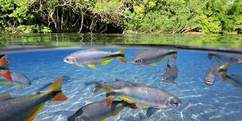 плавающая рыба